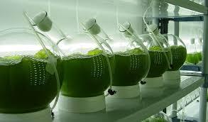 Bioremediacion de aguas con microalgas